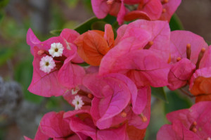 flowers-mada